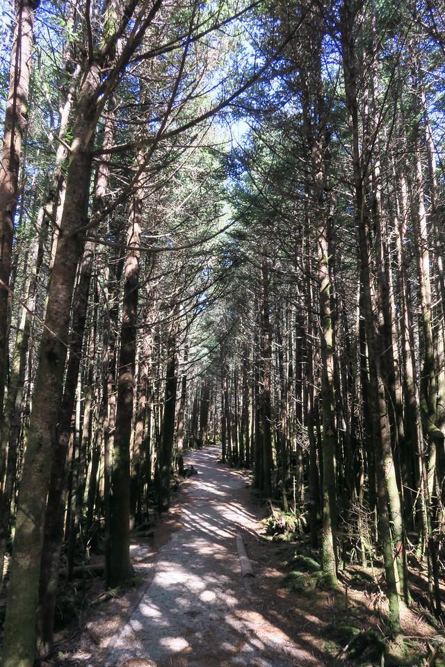 Deep Gap Trail -- 6,580'