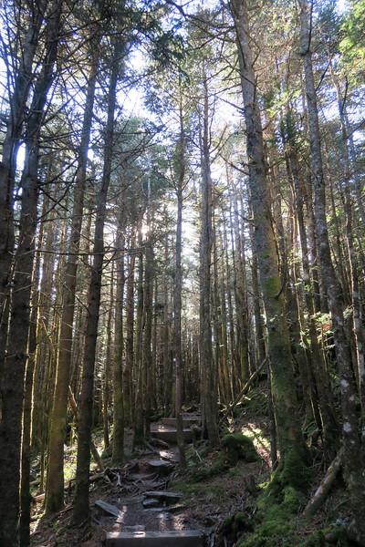 Mount Mitchell Trail -- 6,400'