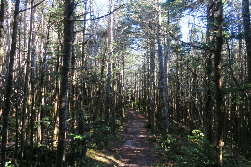 Mount Mitchell Trail -- 6,450'