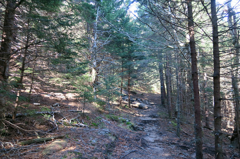 Mount Mitchell Trail -- 5,920'