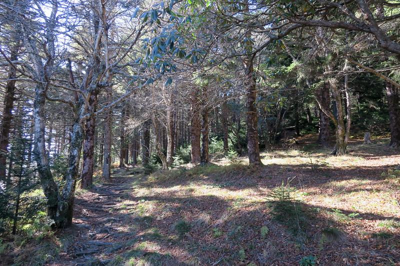 Mount Mitchell Trail -- 5,820'