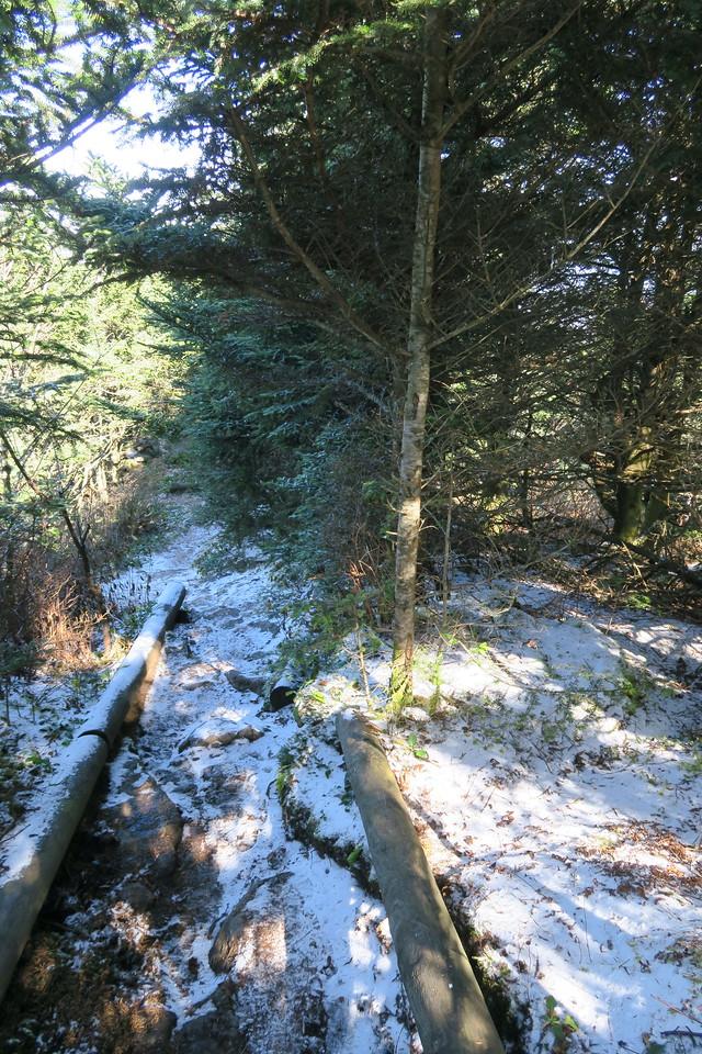 Deep Gap Trail -- 6,620'