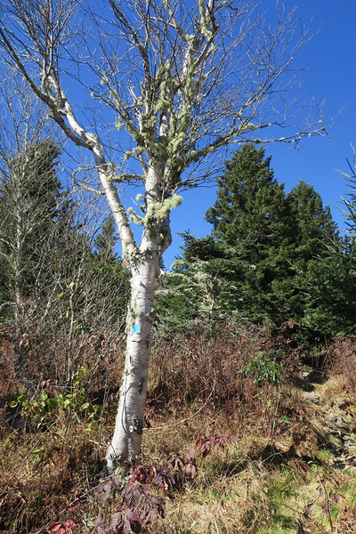 Big Tom Gap Trail -- 5,880'