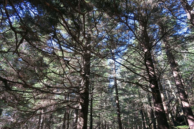 Mount Mitchell Trail -- 6,100'