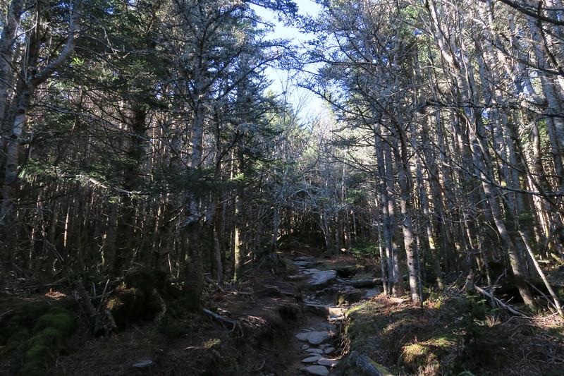 Mount Mitchell Trail -- 6,300'