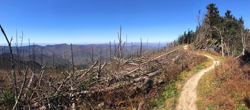 Deep Gap Trail -- 6,450'