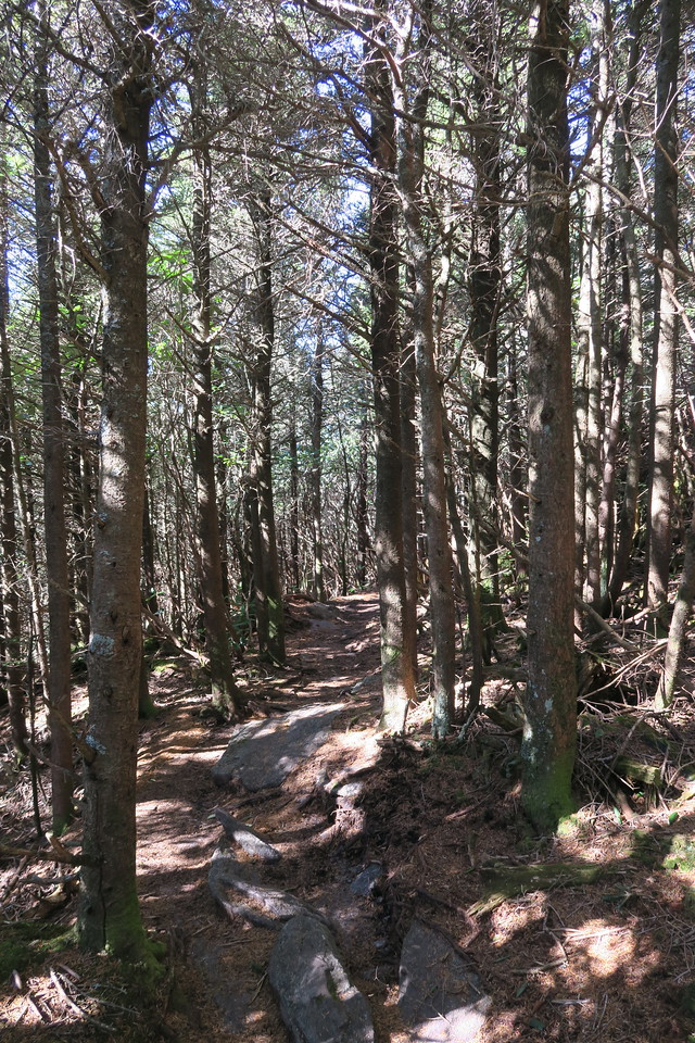 Deep Gap Trail -- 6,250'