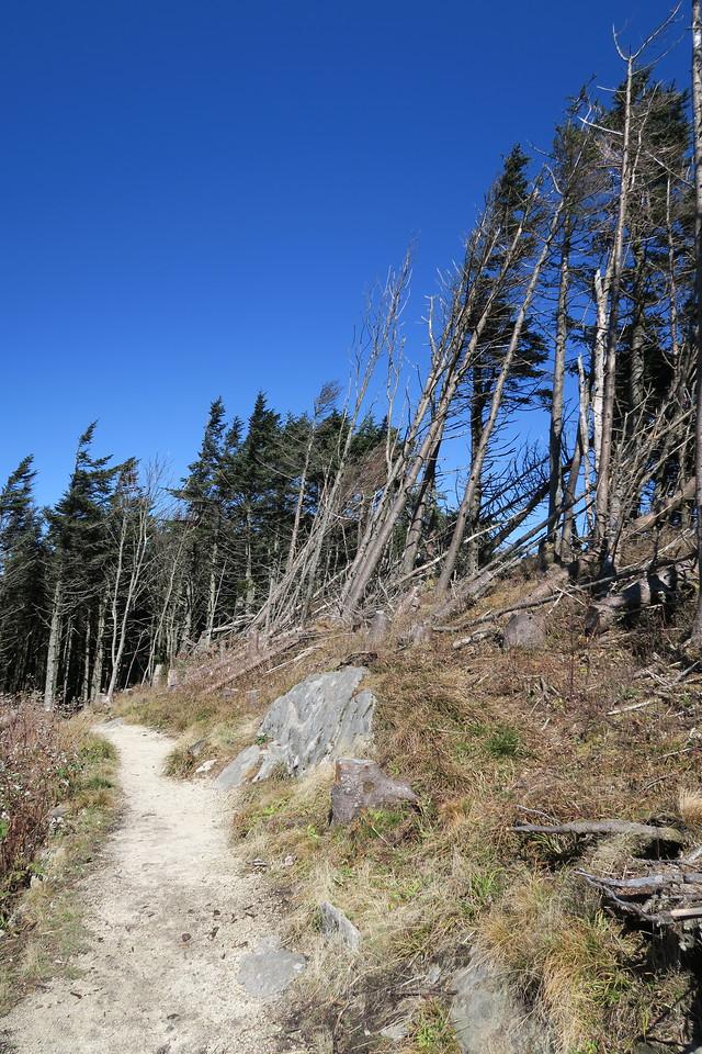 Deep Gap Trail -- 6,450'