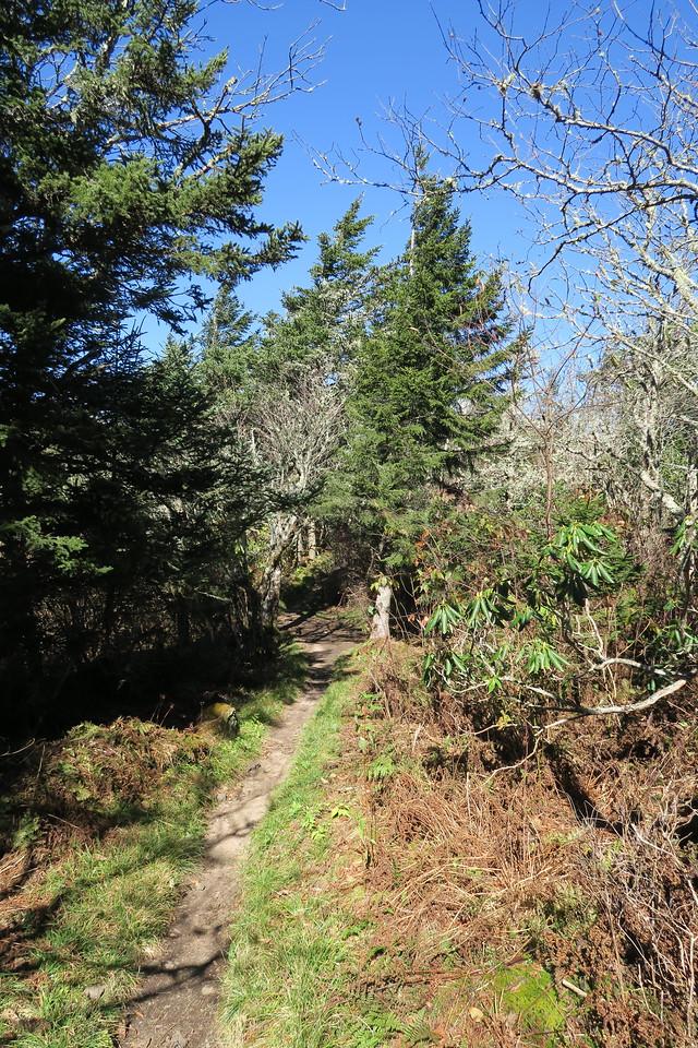 Deep Gap Trail -- 6,200'