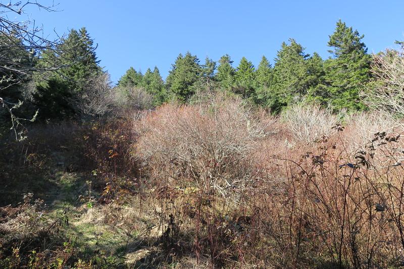 Big Tom Gap Trail -- 6,080'