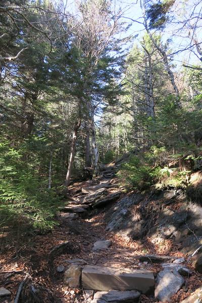 Mount Mitchell Trail -- 6,000'