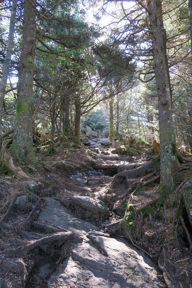 Deep Gap Trail -- 6,400'
