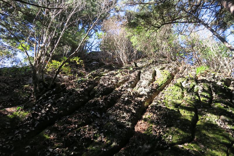 Mount Mitchell Trail -- 6,050'