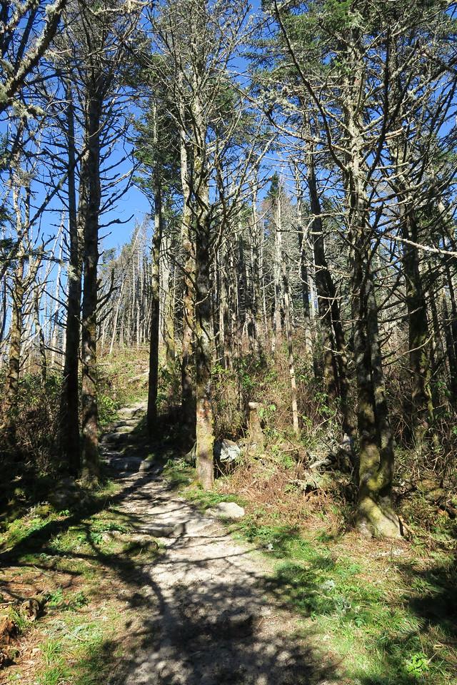 Deep Gap Trail -- 6,350'