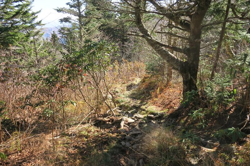 Big Tom Gap Trail -- 6,000'