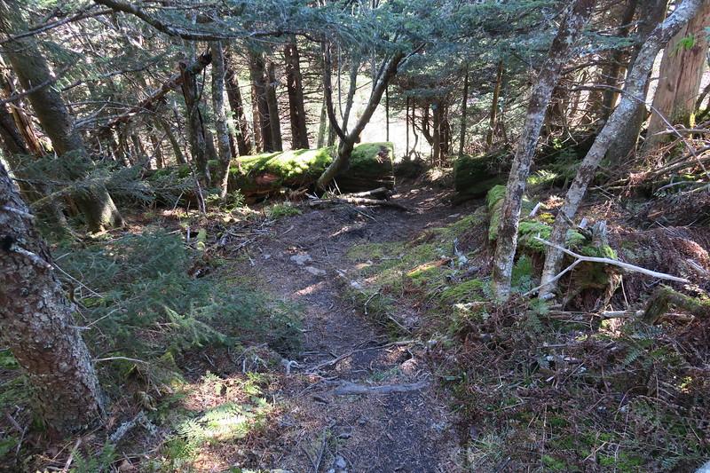 Big Tom Gap Trail -- 6,220'