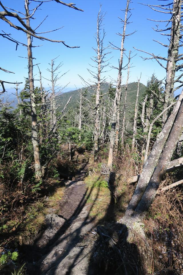 Deep Gap Trail -- 6,560'