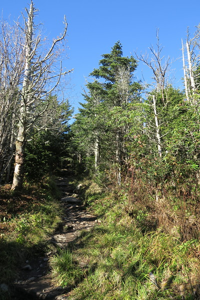 Mount Mitchell Trail -- 6,150'