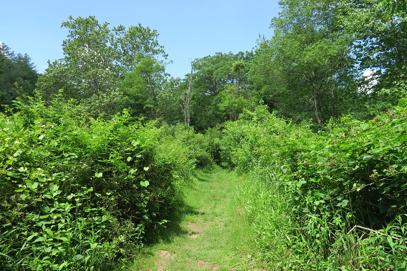 River Run Trail
