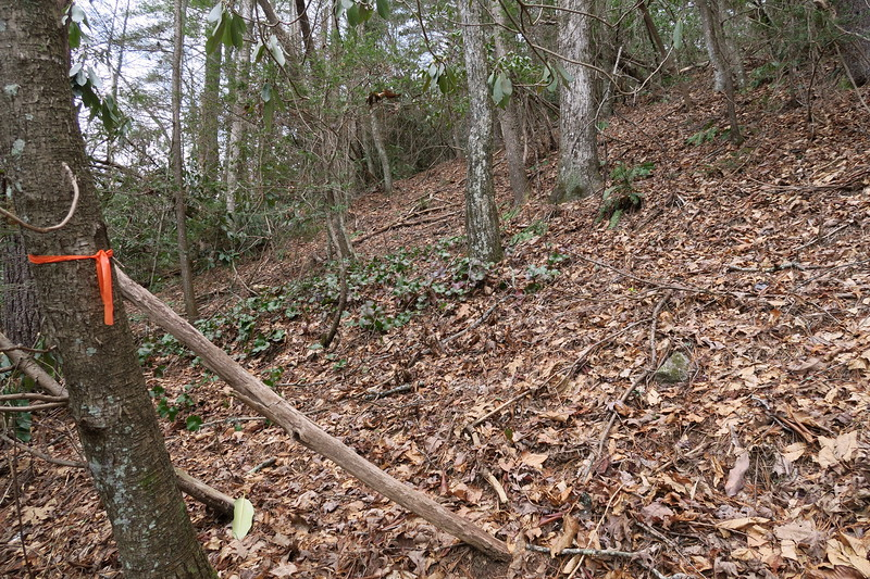 Indian Camp Falls-Bearwallow Creek Road Bushwhack
