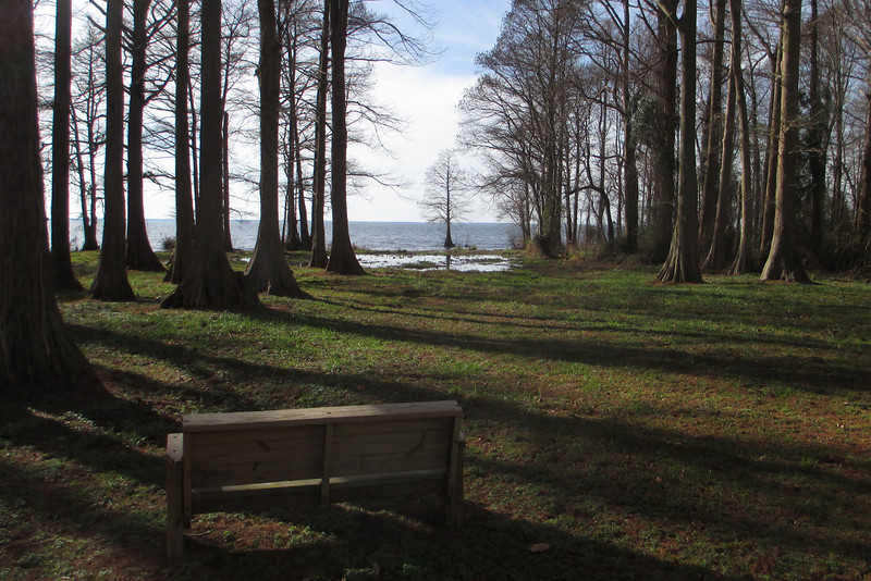 A solitary bench allows for a pleasant place to enjoy the morning sun shining through the lakeside cypress...