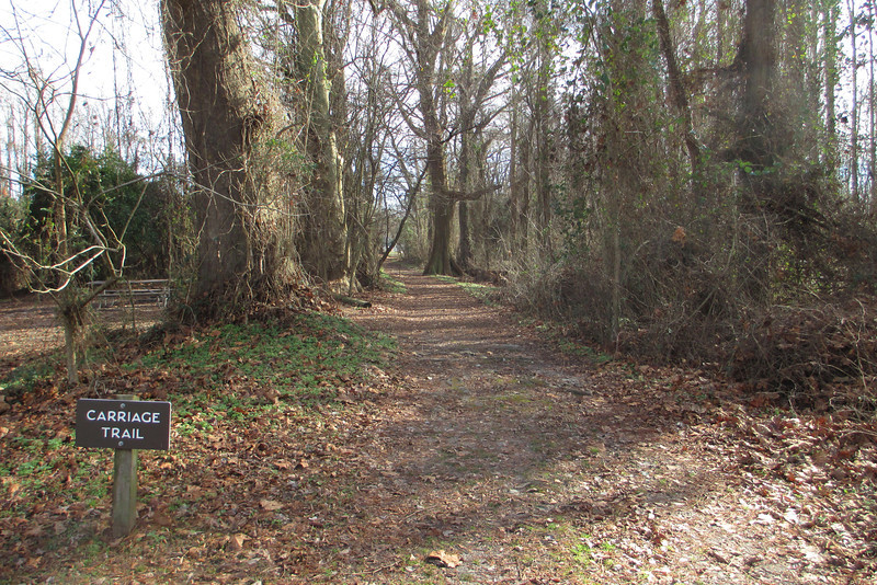 Just the trail I was looking for...the Carriage Trail leads through the woods on the east side of the campground over to the Somerset Place Historic Site...