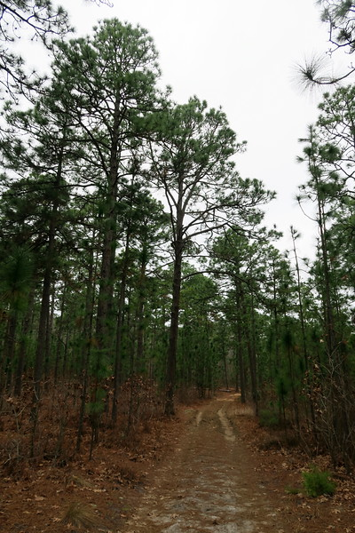 Den Road Trailhead Spur Path