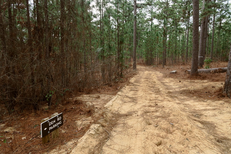 Round Timber Trail-Den Road Trailhead Spur Junction