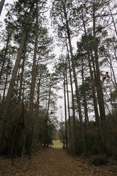 Round Timber Trail