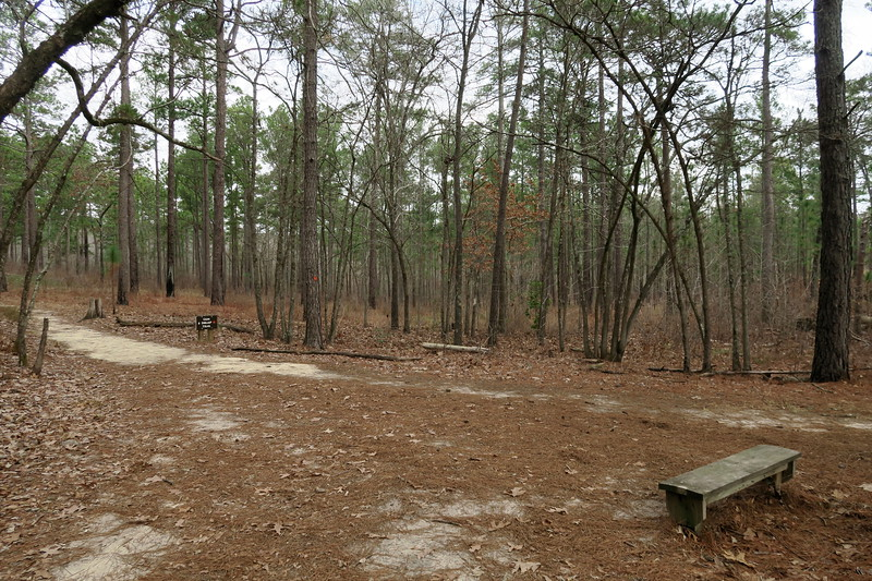 Pine Barrens-Gum Swamp Trail Junction
