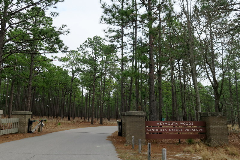 Weymouth Woods-Sandhills Nature Preserve