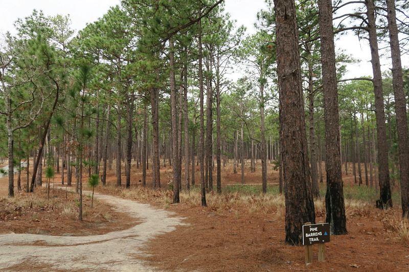 Pine Barrens (West) Trailhead