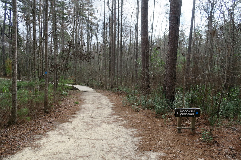 Gum Swamp-Moccasin Crossing Trail Junction