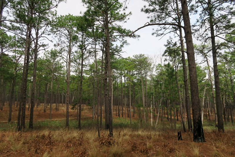 Pine Barrens Trail