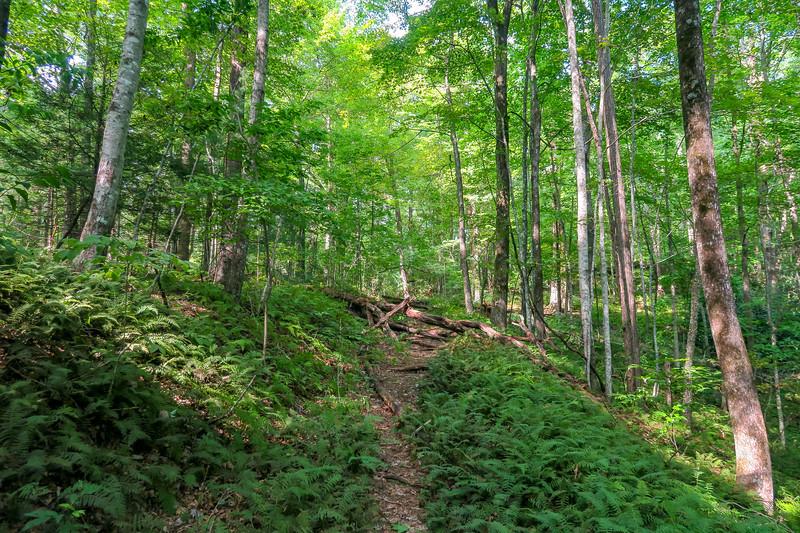 Windy Falls Trail
