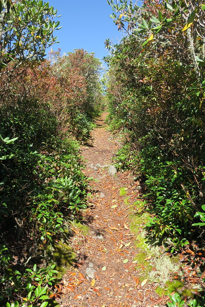 Big Butt Trail -- 5,720'