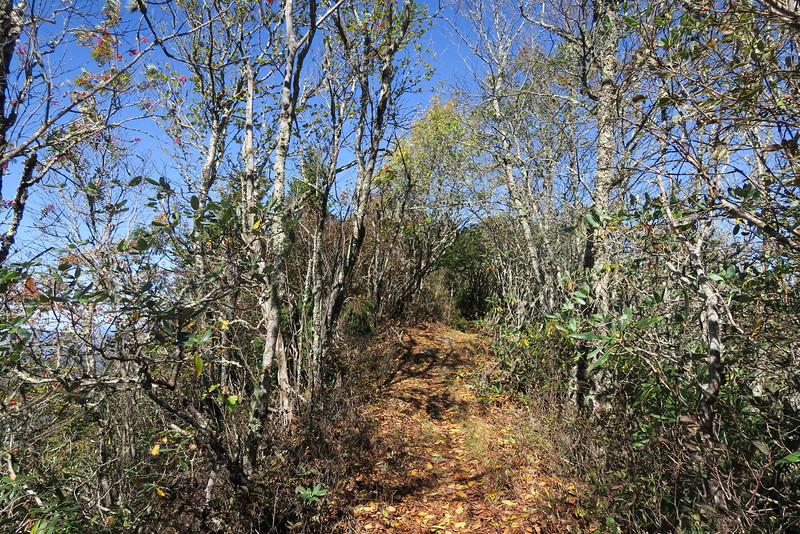 Big Butt Trail -- 5,700'
