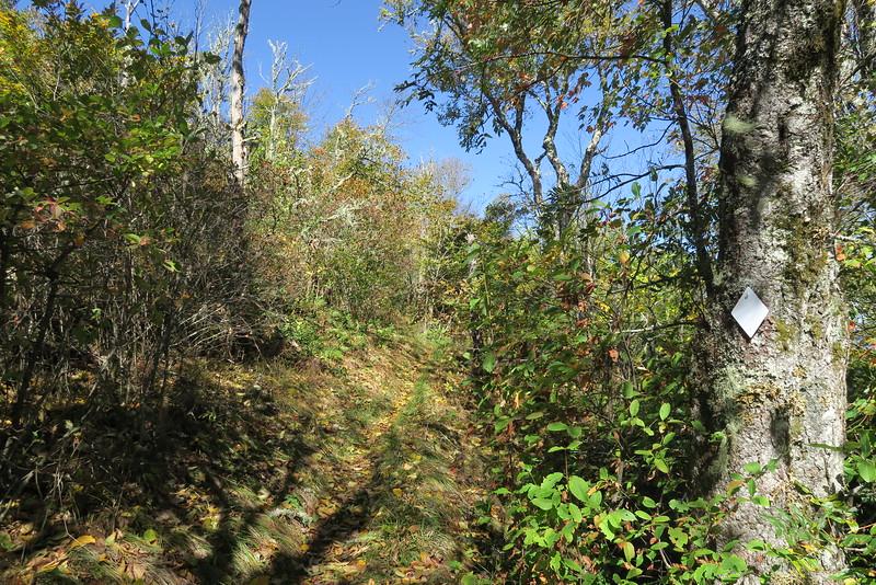 Big Butt Trail -- 5,780'