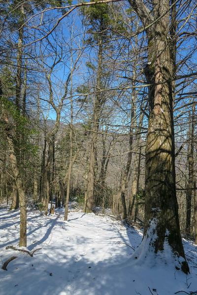 Green Knob Trail -- 4,500'