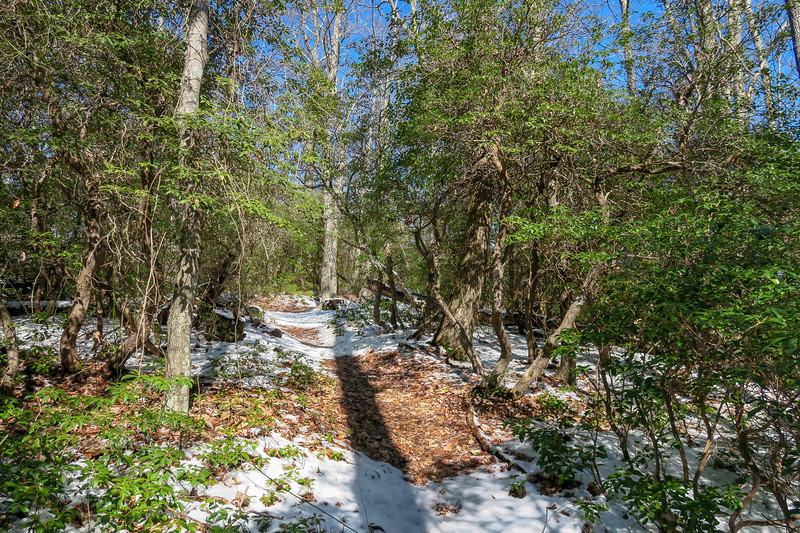 Green Knob Trail -- 3,930'