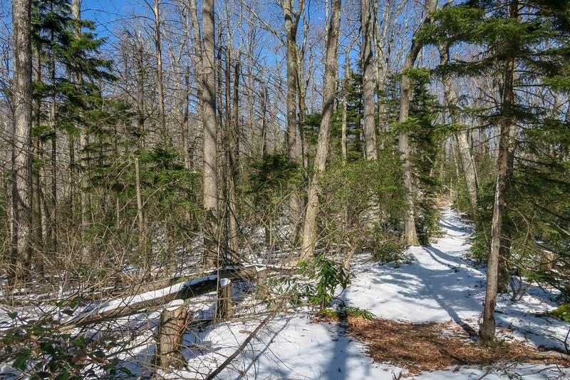 Green Knob Trail -- 4,100'