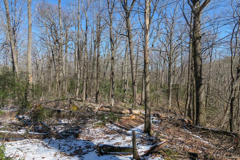 Green Knob Trail -- 3,600'