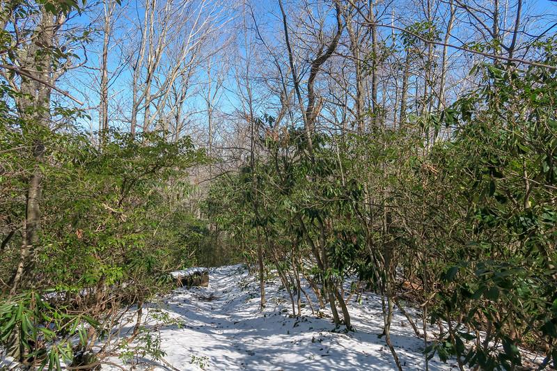Green Knob Trail -- 3,700'