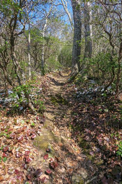 Green Knob Trail -- 3,780'