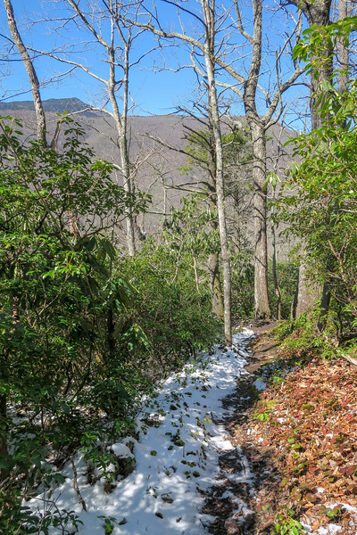 Green Knob Trail -- 3,500'