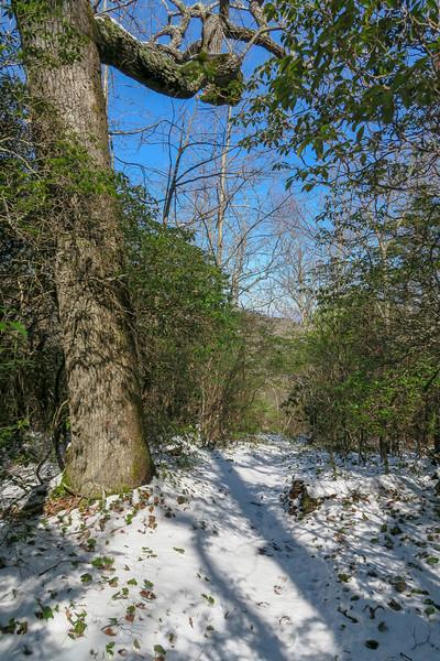 Green Knob Trail -- 3,800'