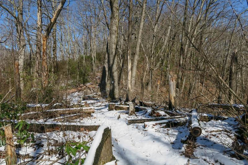 Green Knob Trail -- 3,950'
