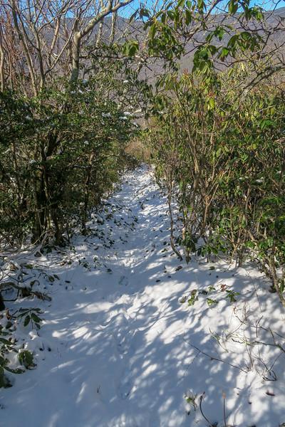 Green Knob Trail -- 4,750'