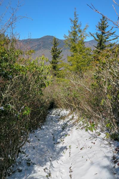 Green Knob Trail -- 4,850'