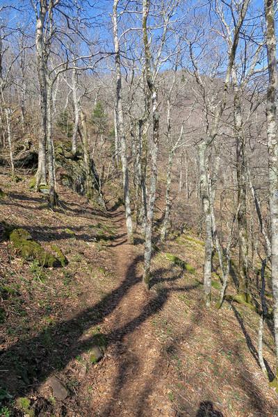 Snowball Trail -- 4,960'